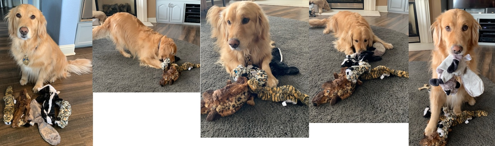 My Golden Retriever Loves these toys