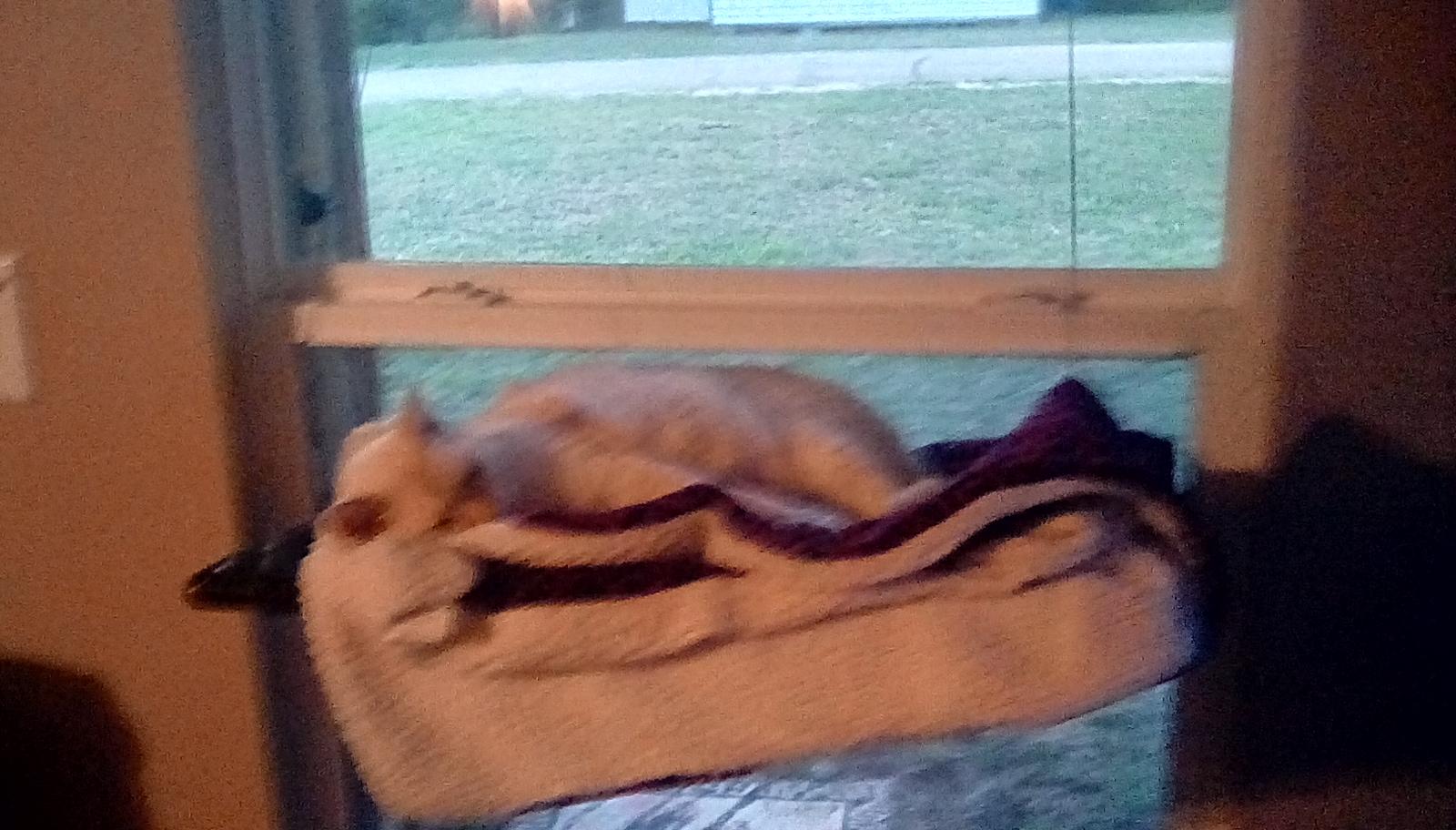 Great cat hammock