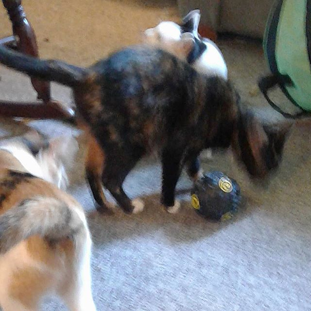 My cats love the snack ball that I got them.