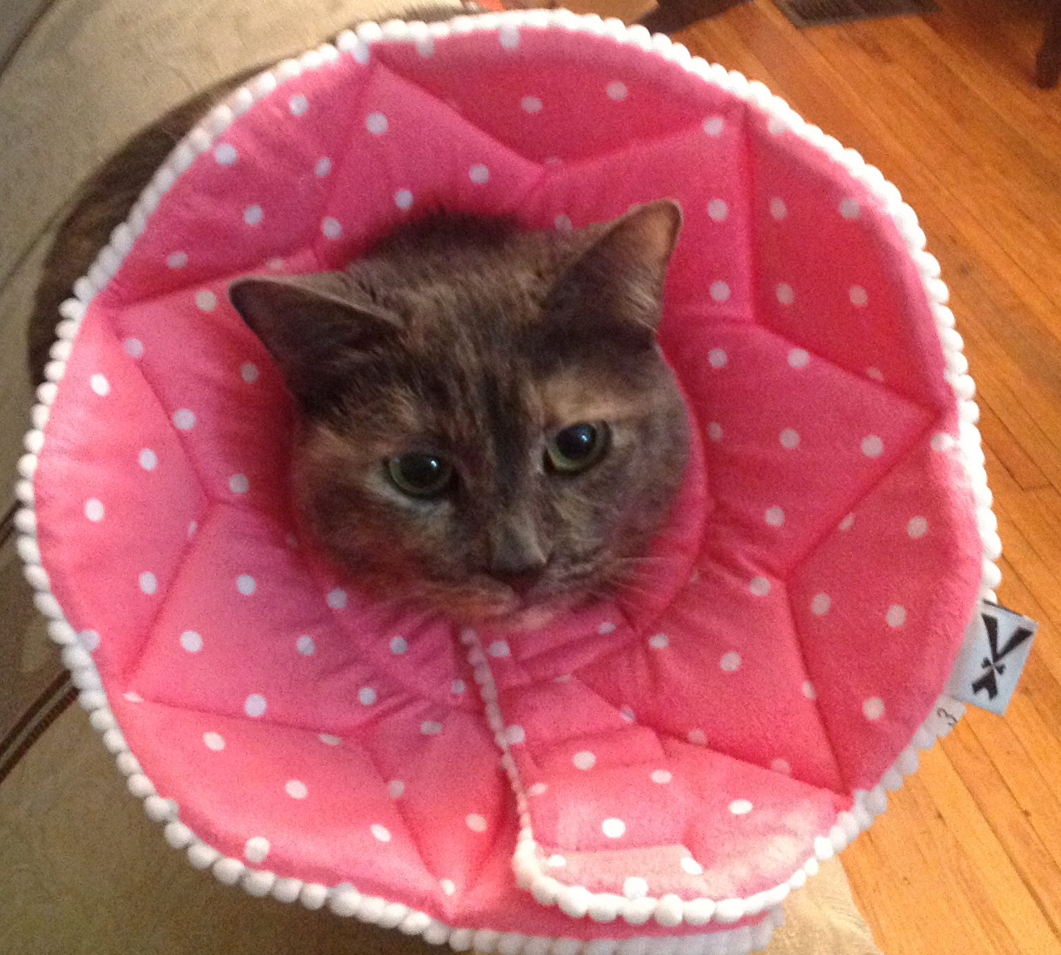 Must be very comfortable to wear, because my female cat loves this cone