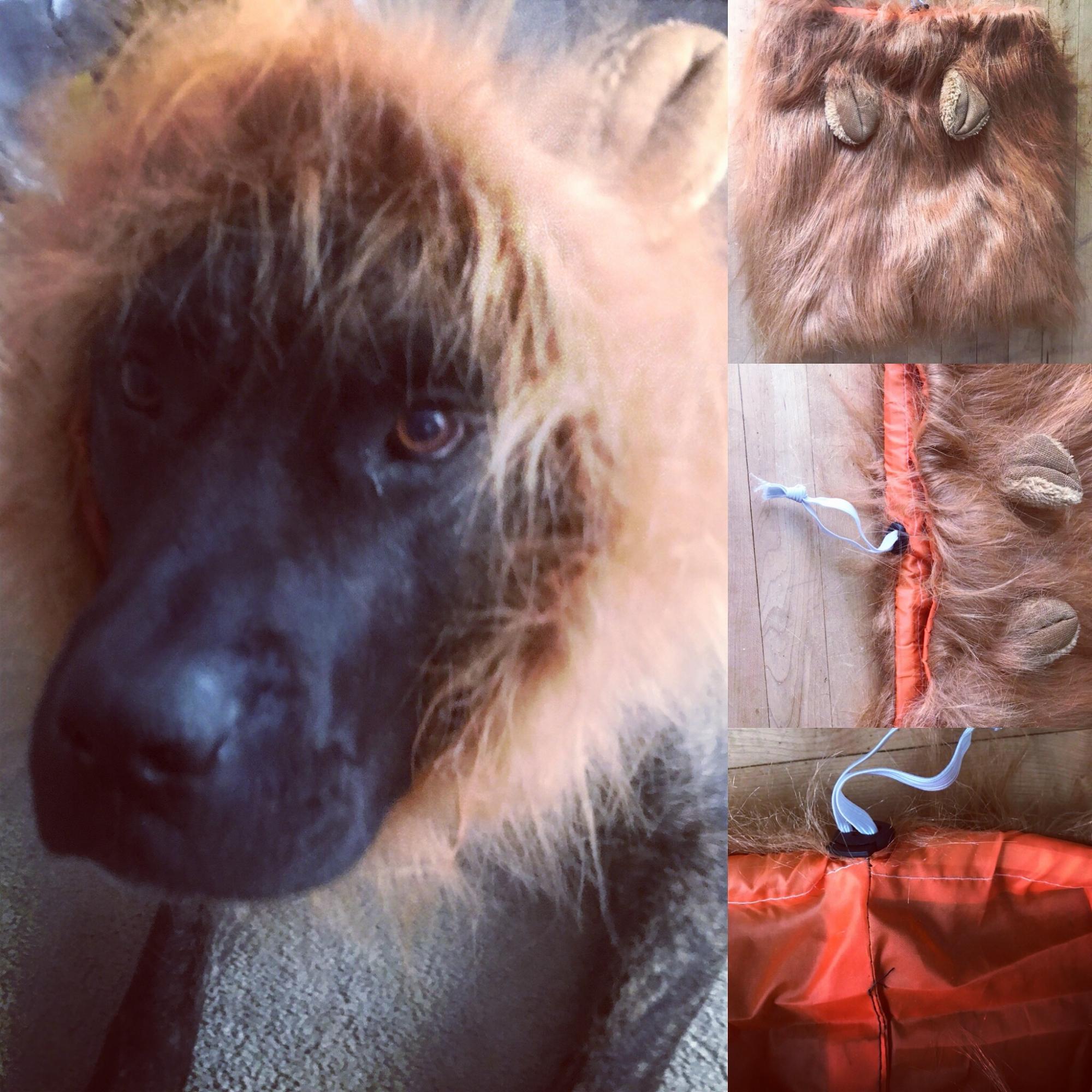 Lion mane for pets