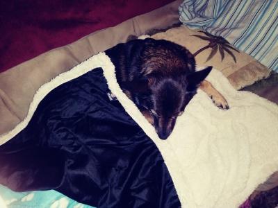 Stunning Sherpa Pet Blanket