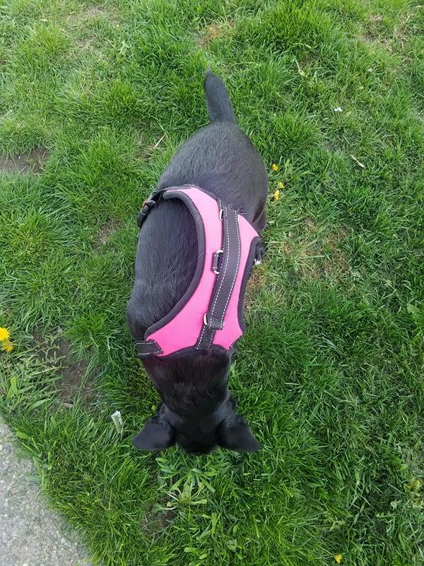 nice padded harness with locking clasps