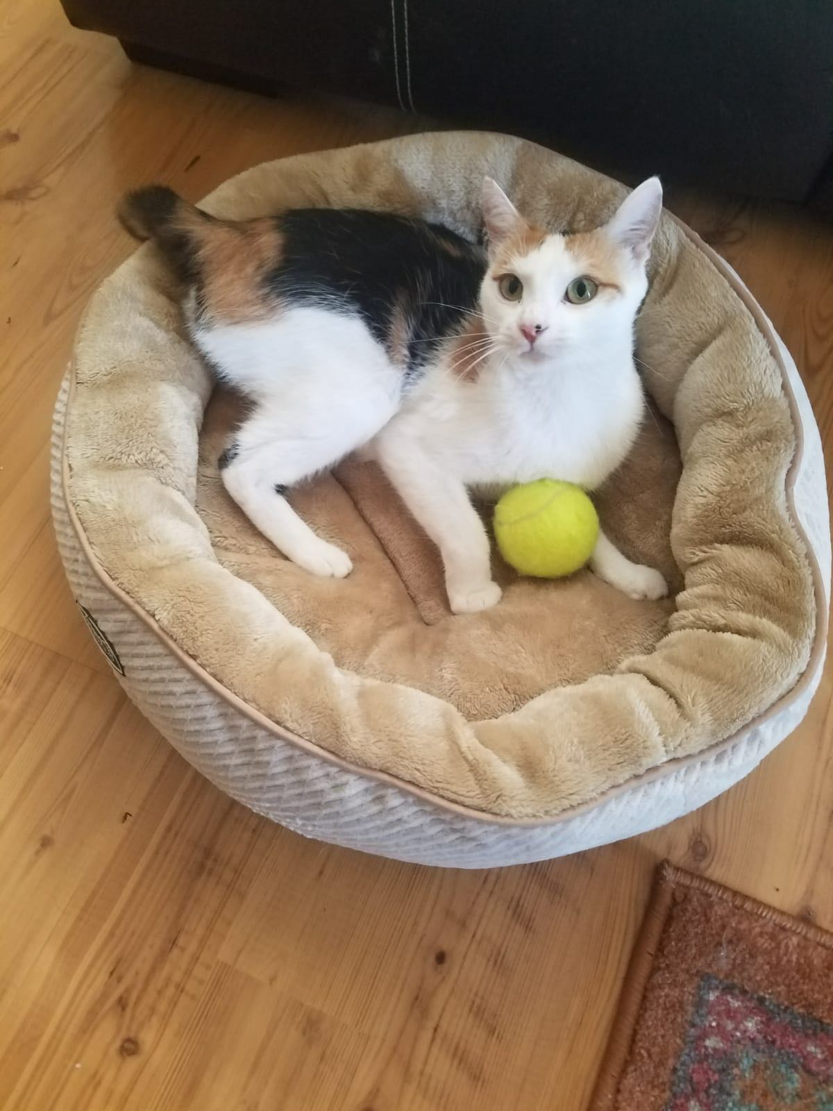 Cat loves her new bed